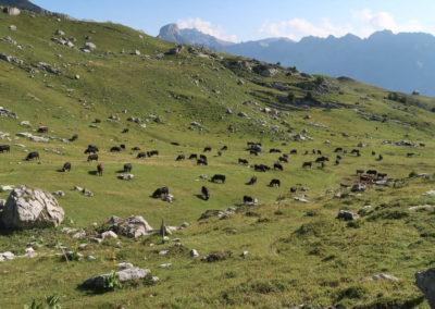2019-08-24 Rafaela Mont-Gond (11)